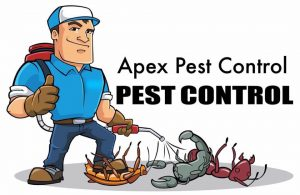 pest control in Headingley