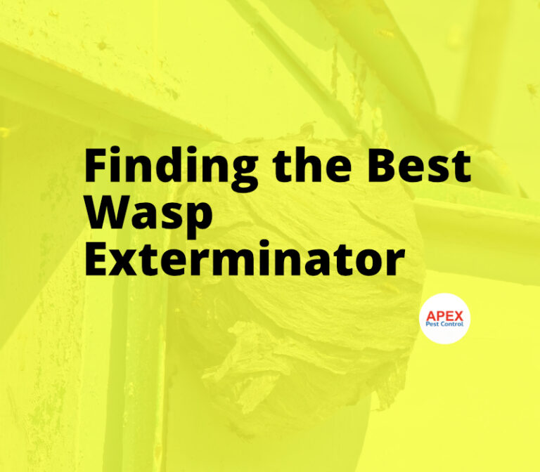 best wasp controller nearby