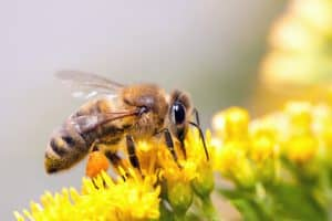 bee removal Sheffield