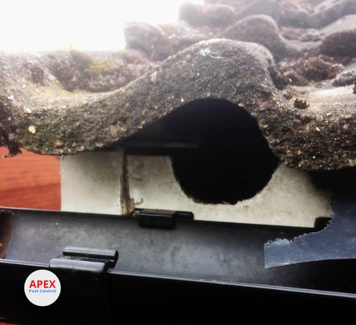 pest control squirrels damage