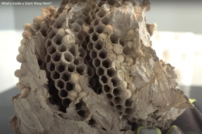 Inside a nest
