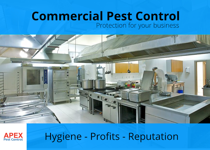 pest service for business