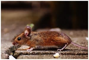 business pest control contract