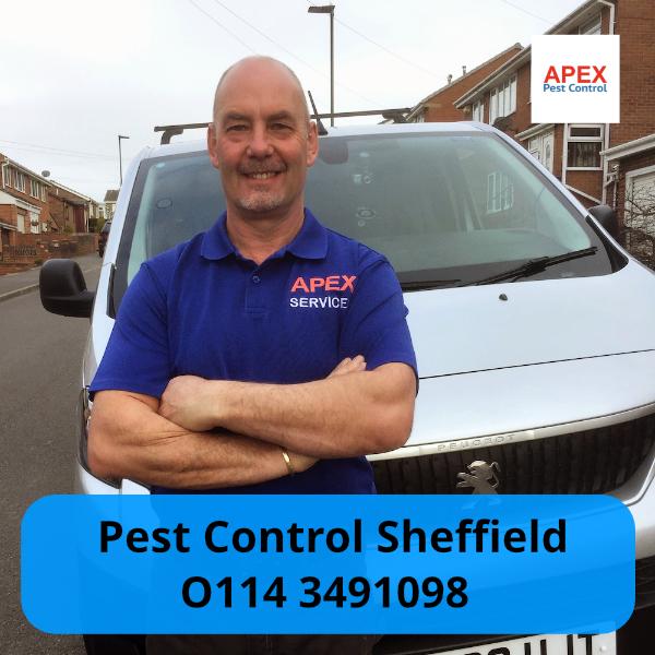 pest control sheffield