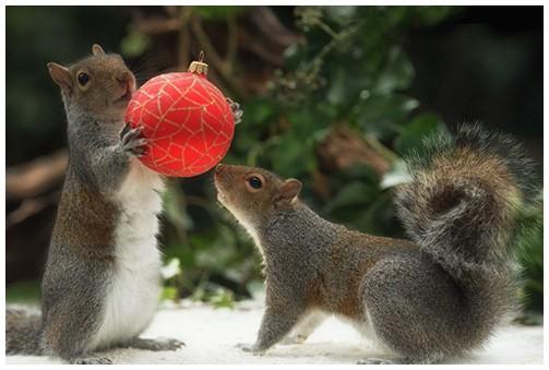 pest control squirrels Christmas decorations
