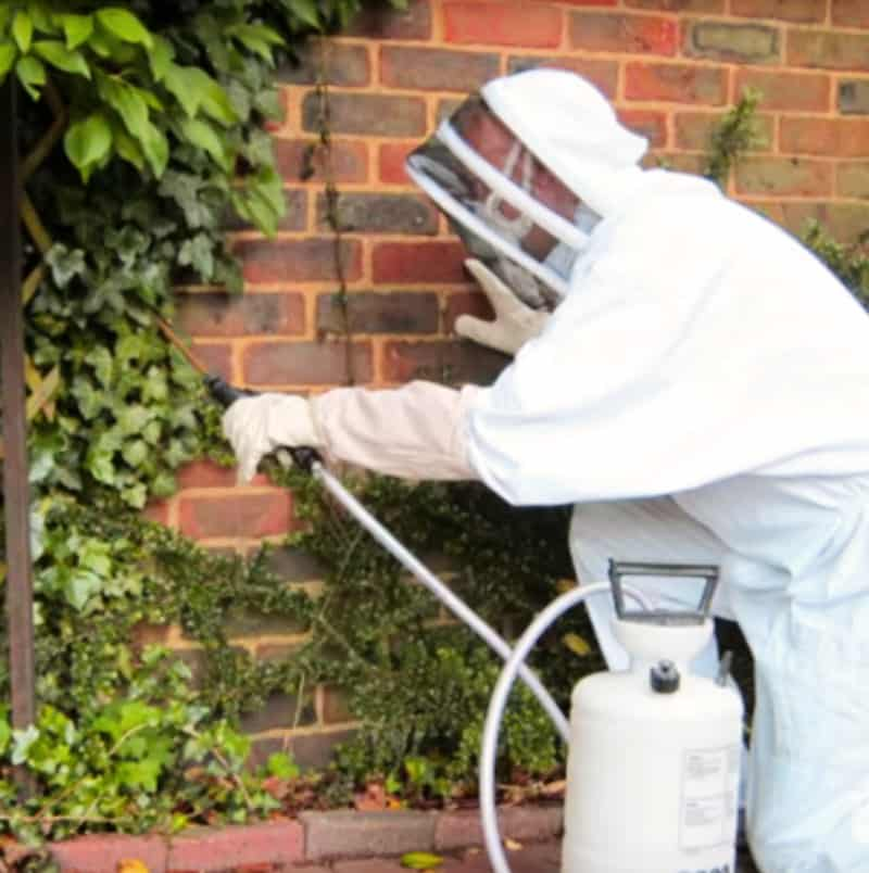 pest control wasps professional treatment