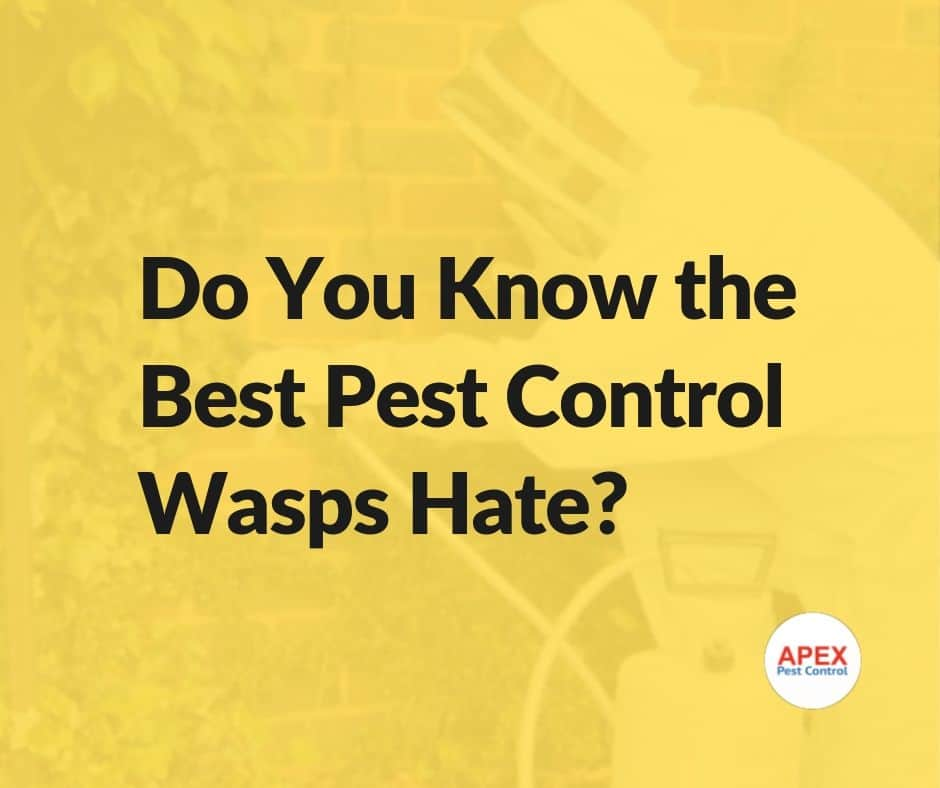 pest control wasps hate
