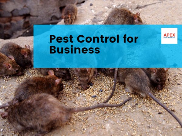 business rodent control