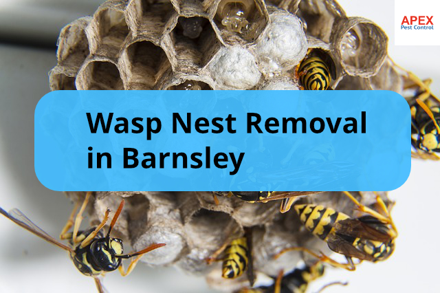 wasp nest removal barnsley - swarm