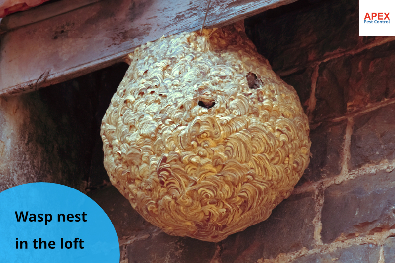 wasp nest removal in loft barnsley, uk