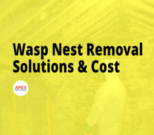 Removing an insect nest