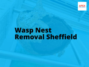 Wasp Nest Removal Sheffield